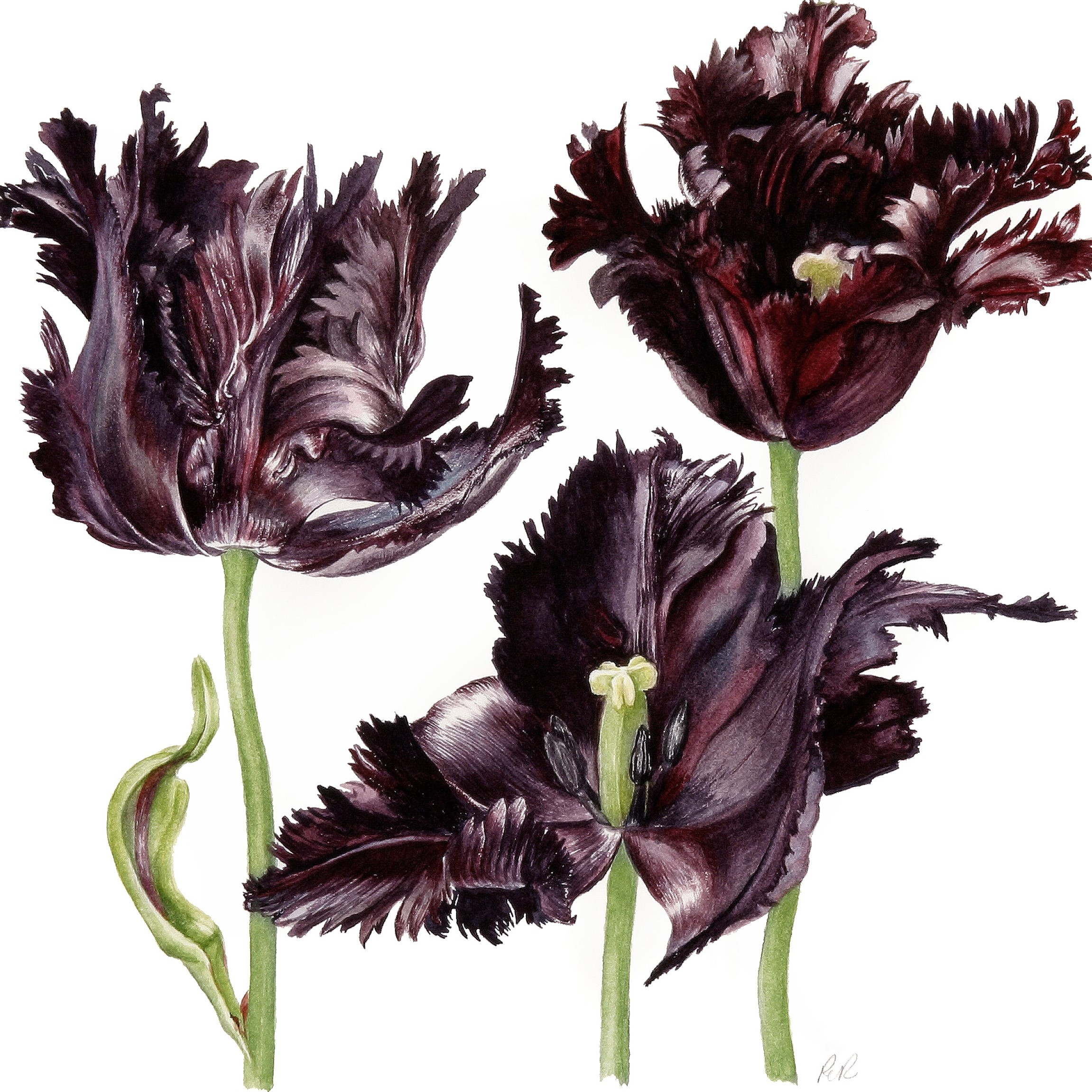 /uploads/courses/1320-02/Parrot_Tulips.jpg