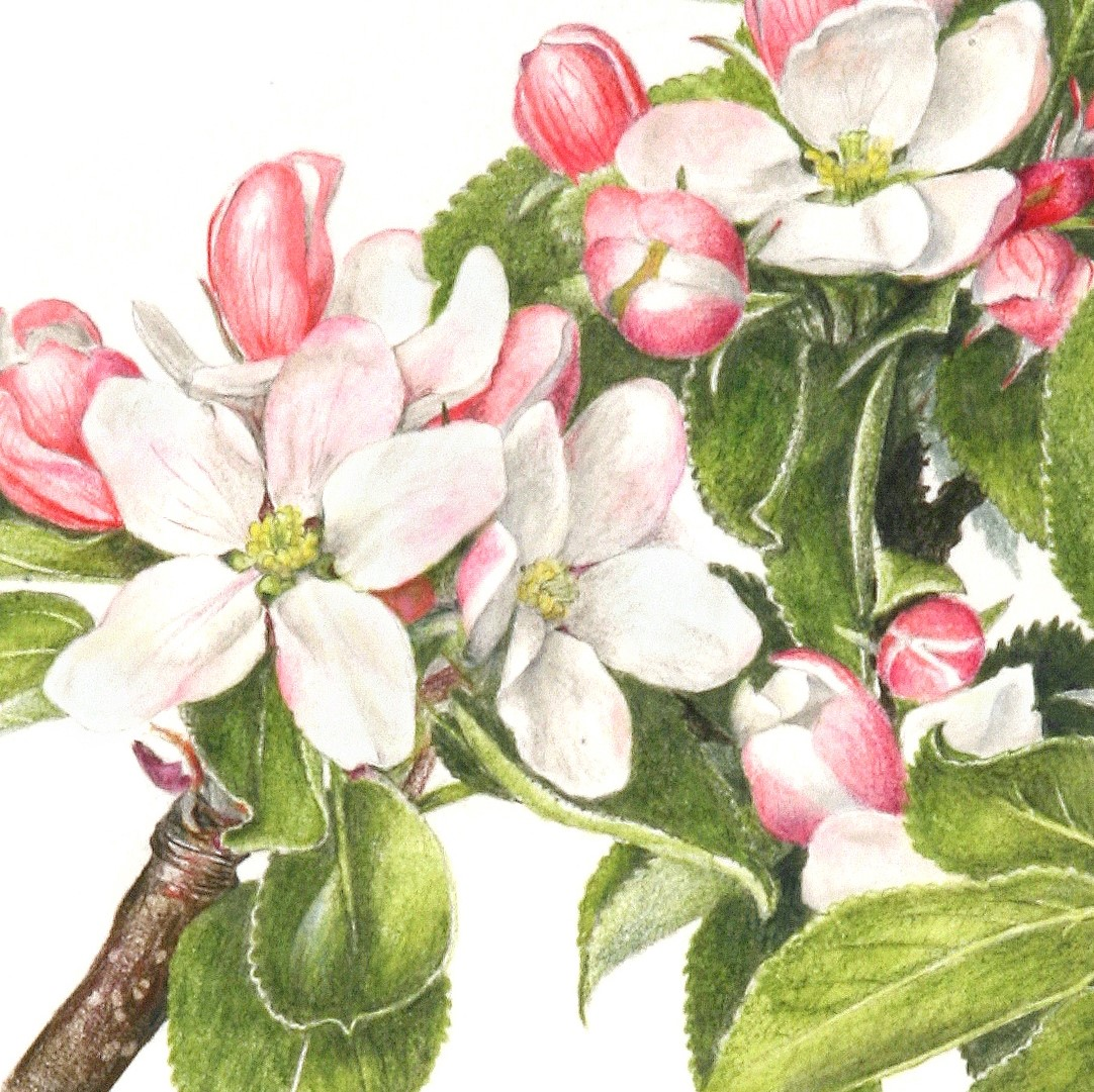 /uploads/courses/1720-01/Apple_blossom-square.jpg