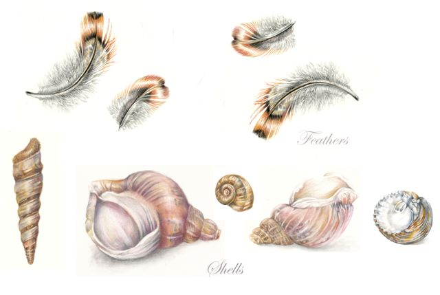 /uploads/courses/3217-10/JW_Feathers_and_shells_2.jpg